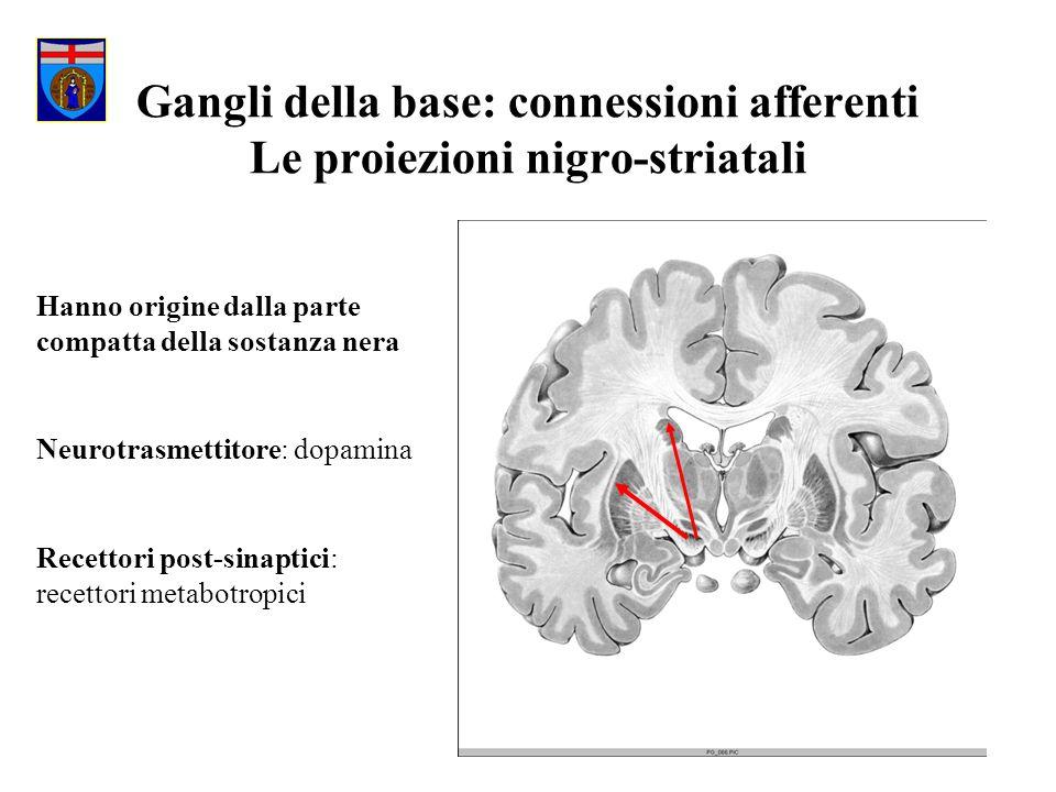 Gangli della base: connessioni afferenti Le proiezioni nigro-striatali