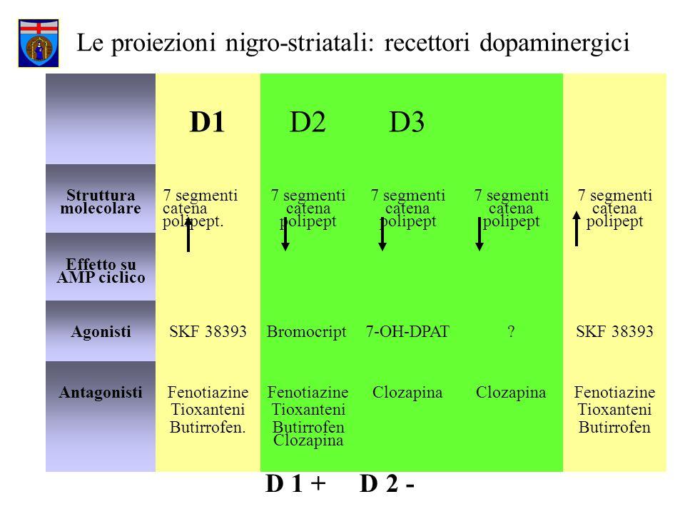 Le proiezioni nigro-striatali: recettori dopaminergici