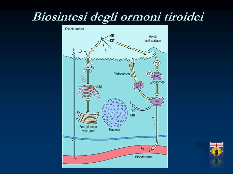 Biosintesi degli ormoni tiroidei