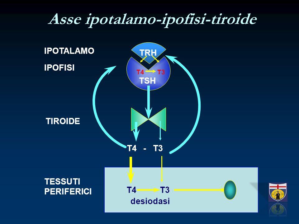 Asse ipotalamo-ipofisi-tiroide