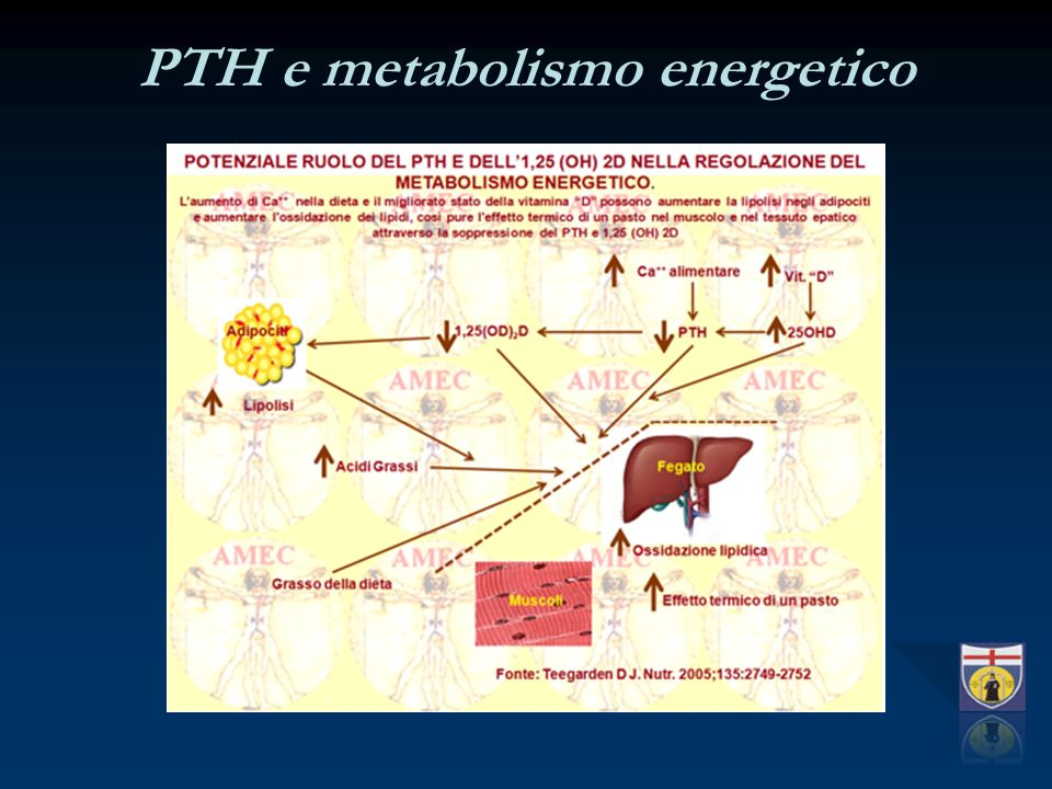 PTH e metabolismo energetico