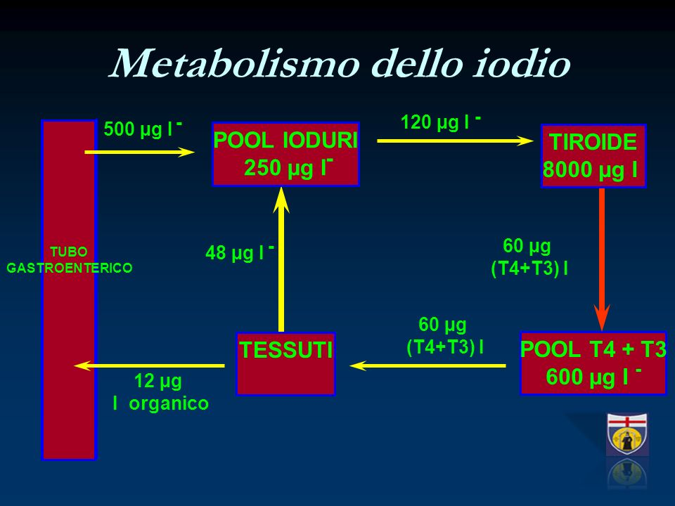 Metabolismo dello iodio