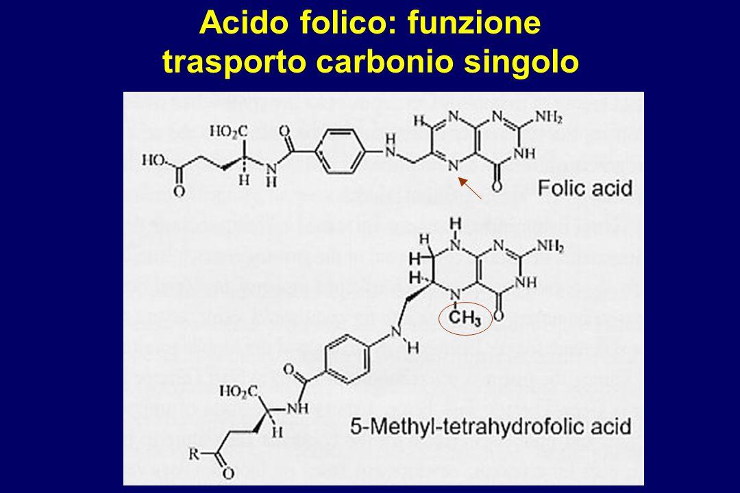 Acido folico: funzione trasporto carbonio singolo