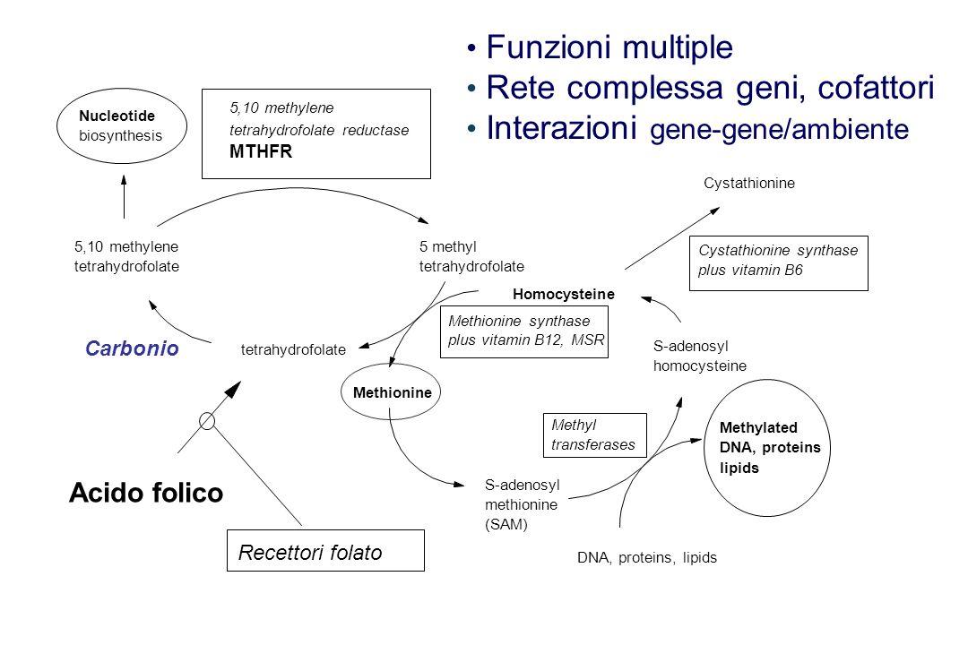 Rete complessa geni, cofattori Interazioni gene-gene/ambiente