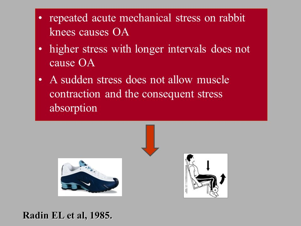 repeated acute mechanical stress on rabbit knees causes OA