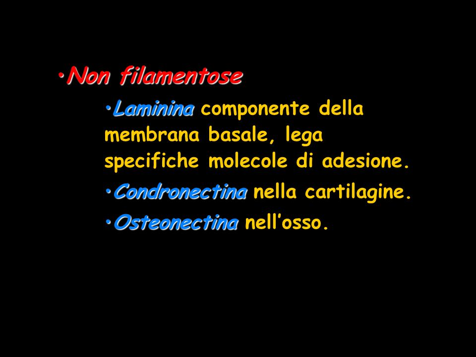 Non filamentoseLaminina componente della membrana basale, lega specifiche molecole di adesione. Condronectina nella cartilagine.
