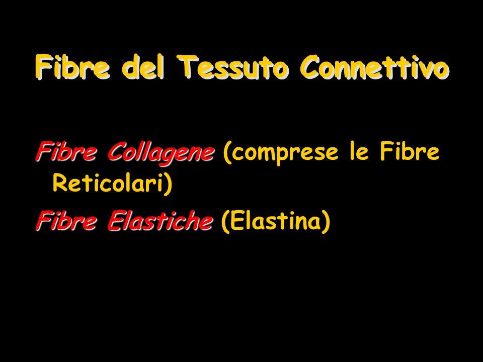 Fibre del Tessuto Connettivo