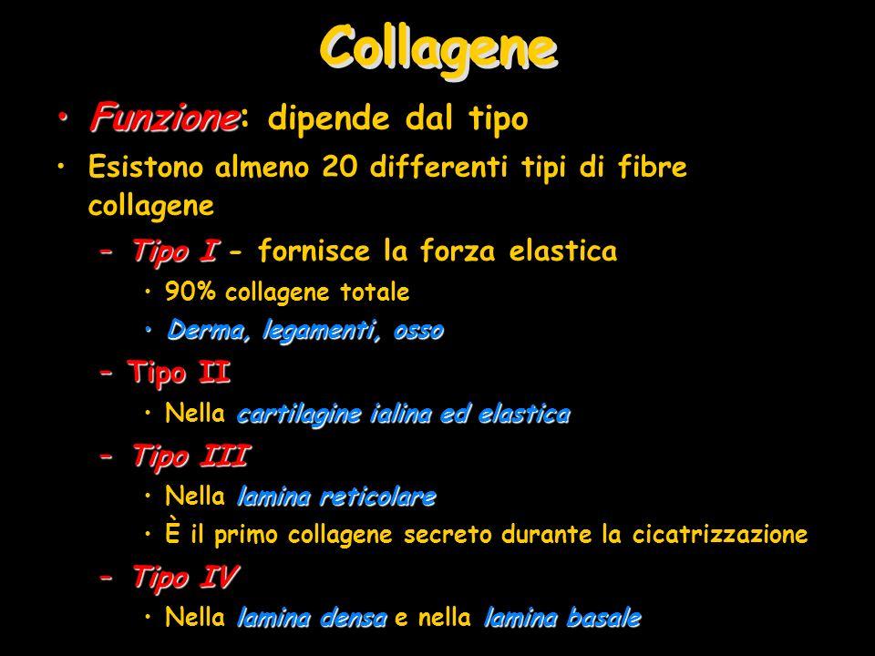 Collagene Funzione: dipende dal tipo