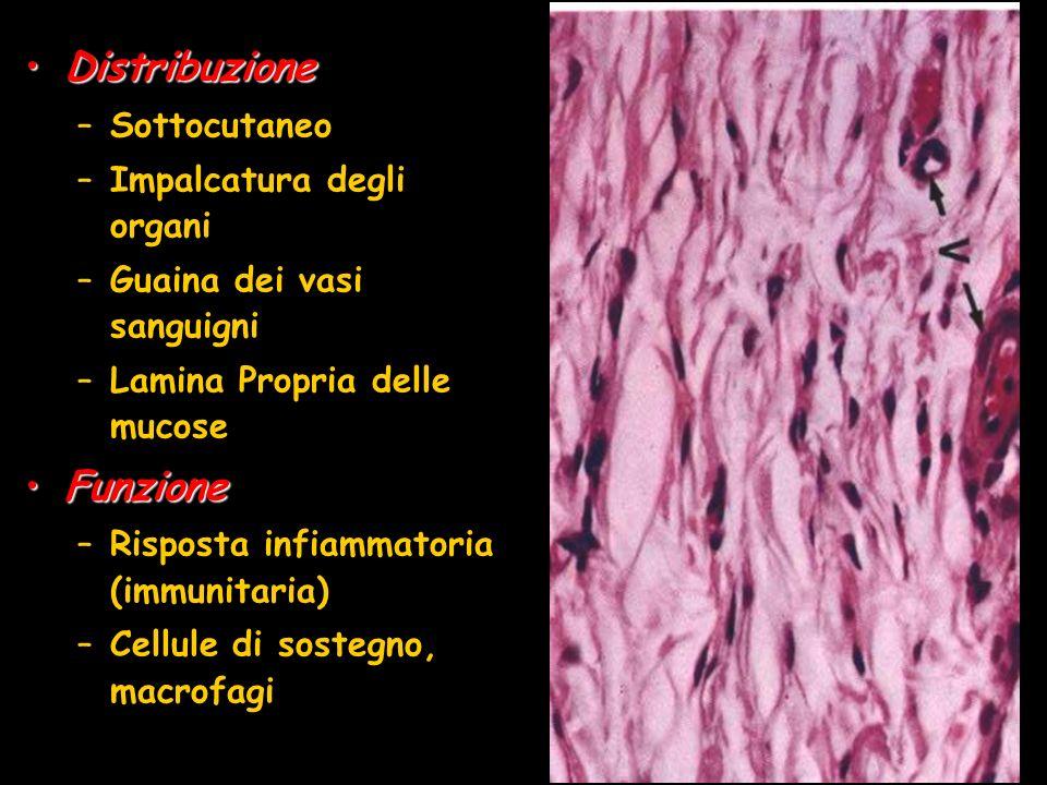 Distribuzione Funzione Sottocutaneo Impalcatura degli organi