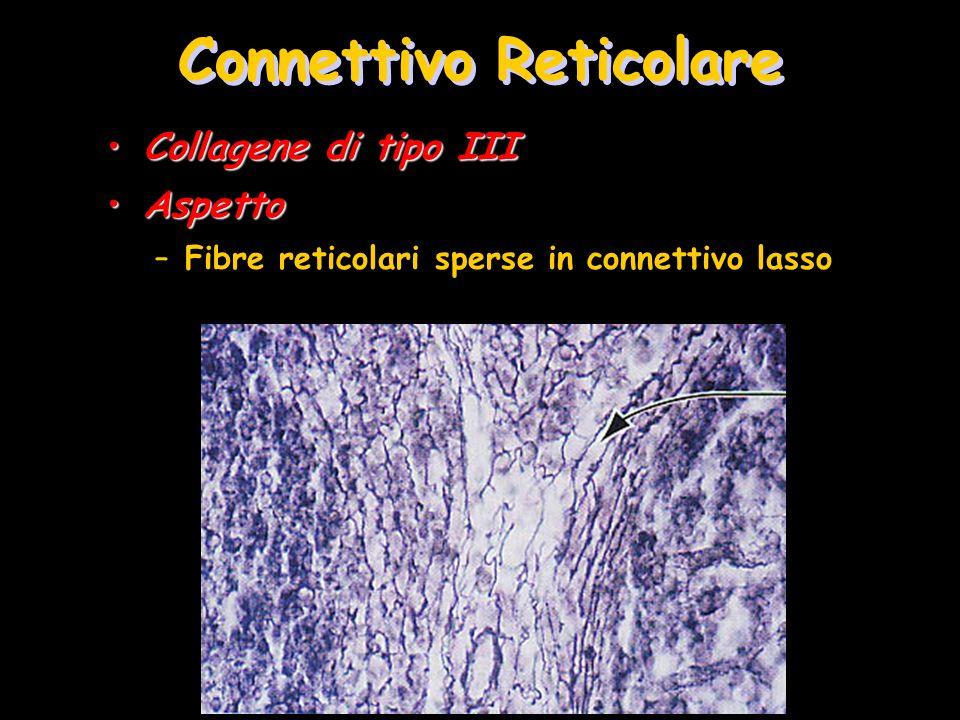 Connettivo Reticolare