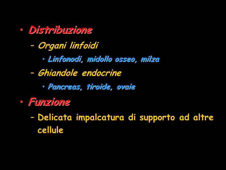 Distribuzione Funzione Organi linfoidi Ghiandole endocrine