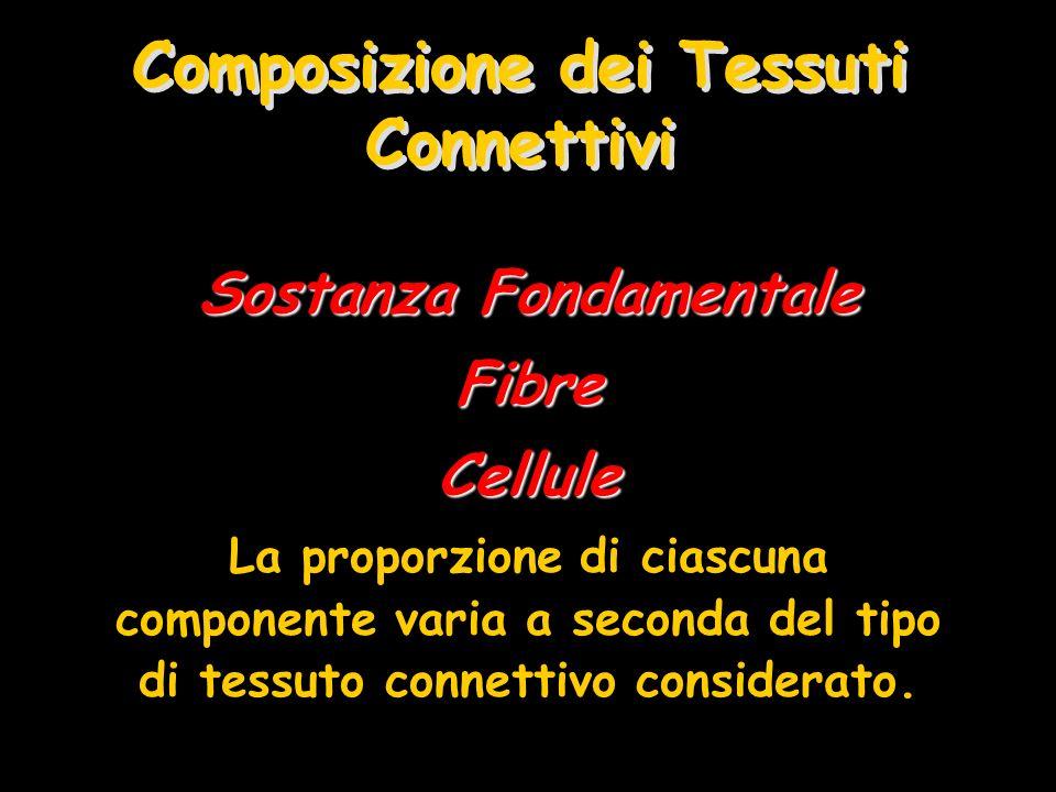 Composizione dei Tessuti Connettivi