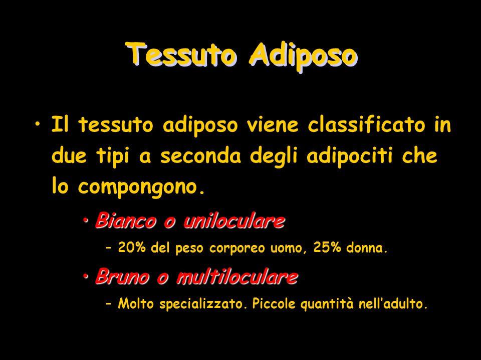Tessuto Adiposo Il tessuto adiposo viene classificato in due tipi a seconda degli adipociti che lo compongono.