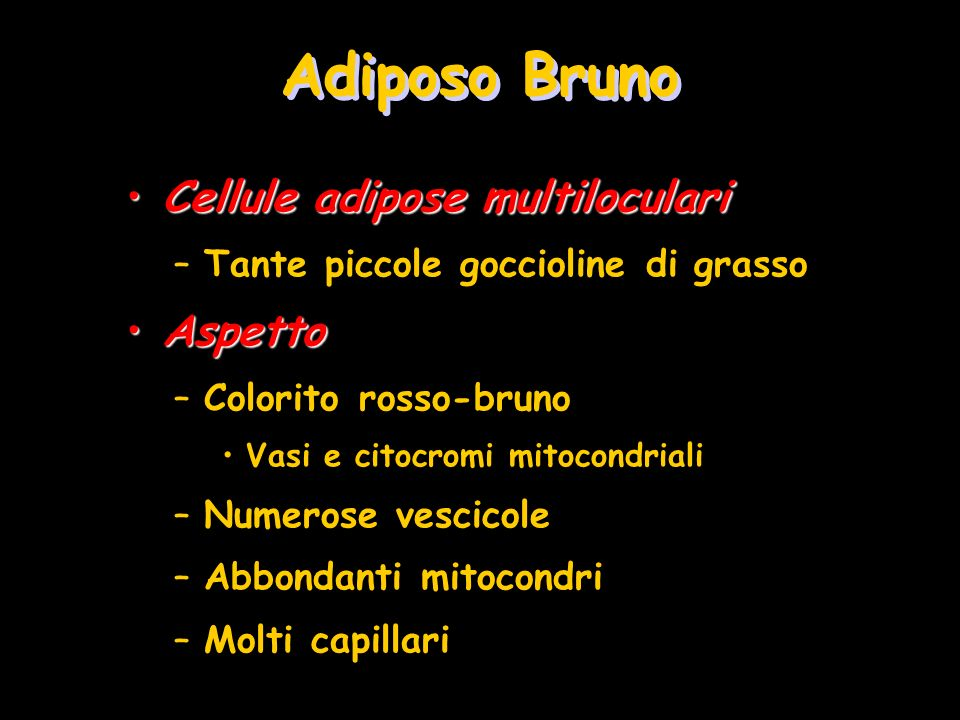 Adiposo Bruno Cellule adipose multiloculari Aspetto