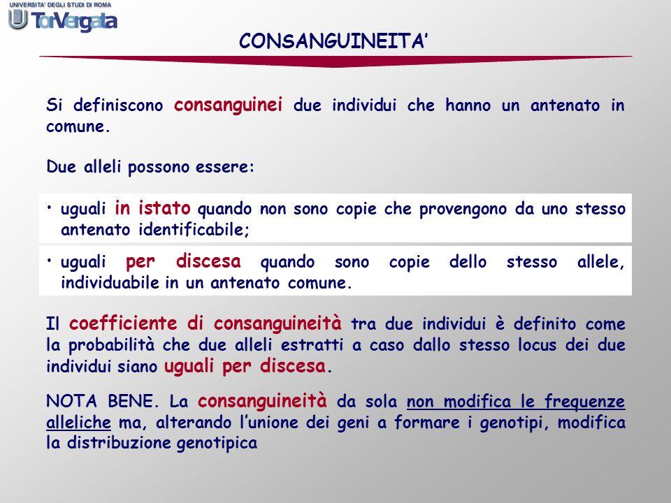 CONSANGUINEITA' Si definiscono consanguinei due individui che hanno un antenato in comune. Due alleli possono essere: