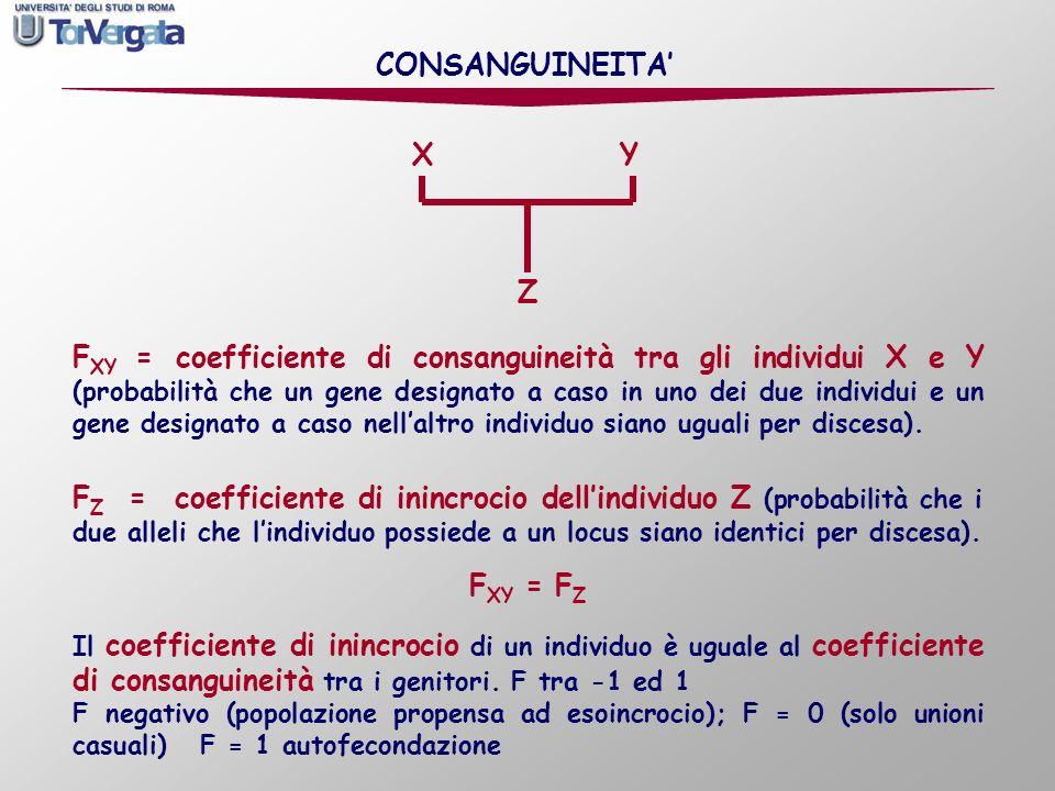 CONSANGUINEITA' FXY = FZ