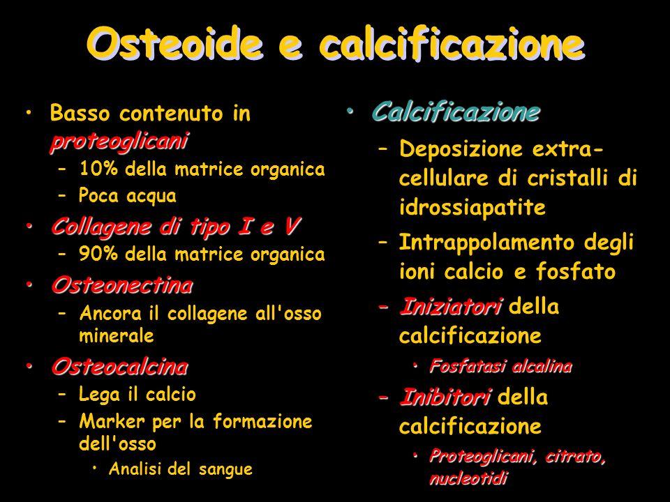 Osteoide e calcificazione
