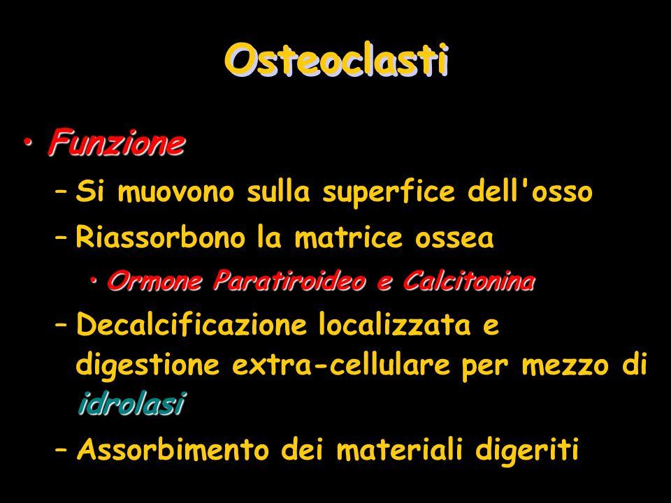 Osteoclasti Funzione Si muovono sulla superfice dell osso