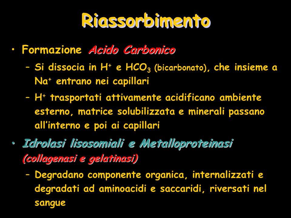 Riassorbimento Formazione Acido Carbonico