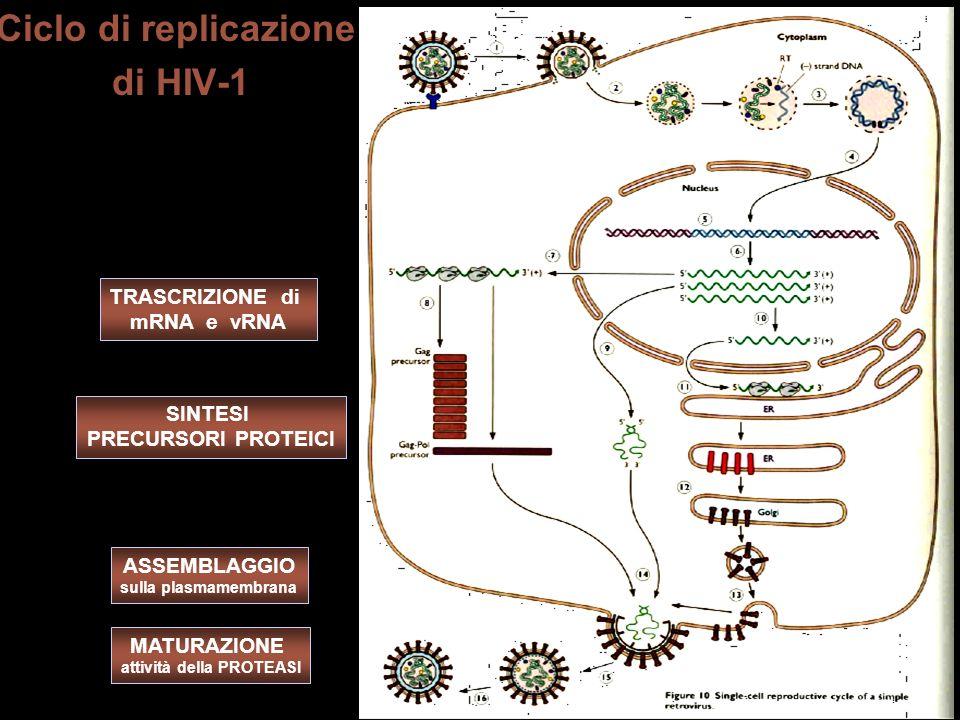 Ciclo di replicazione di HIV-1