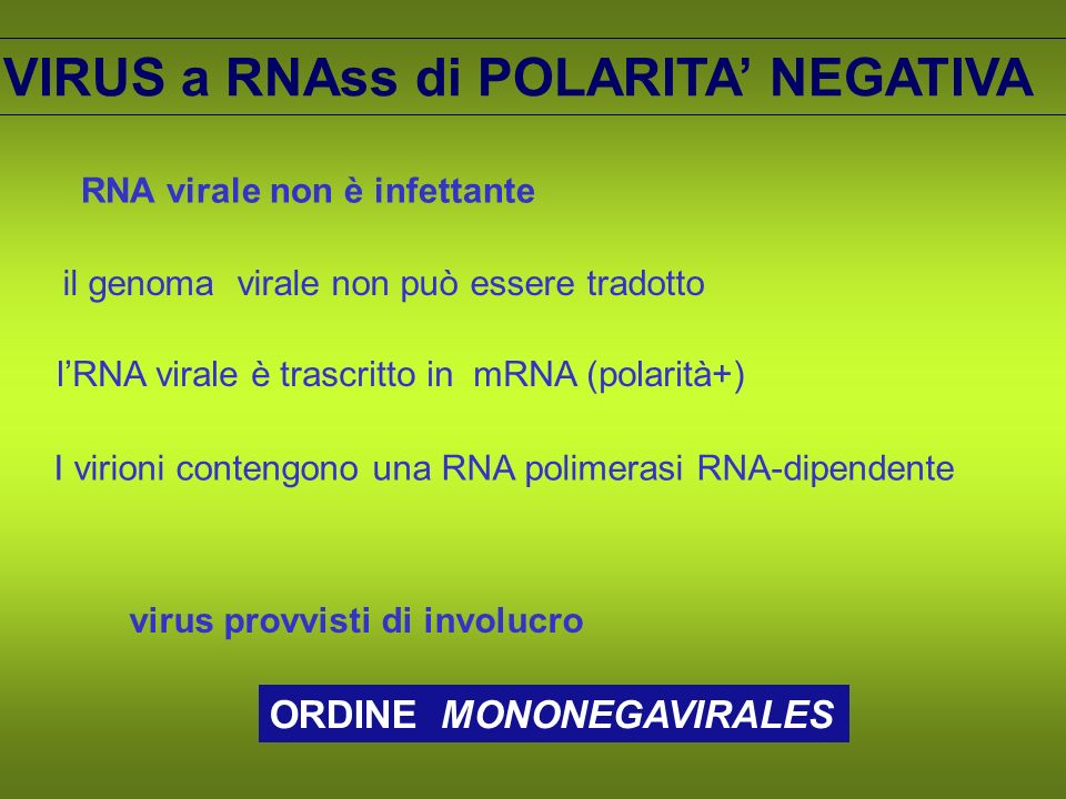 VIRUS a RNAss di POLARITA' NEGATIVA