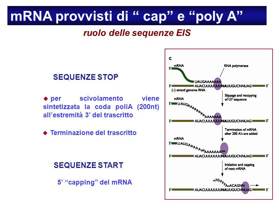 ruolo delle sequenze EIS
