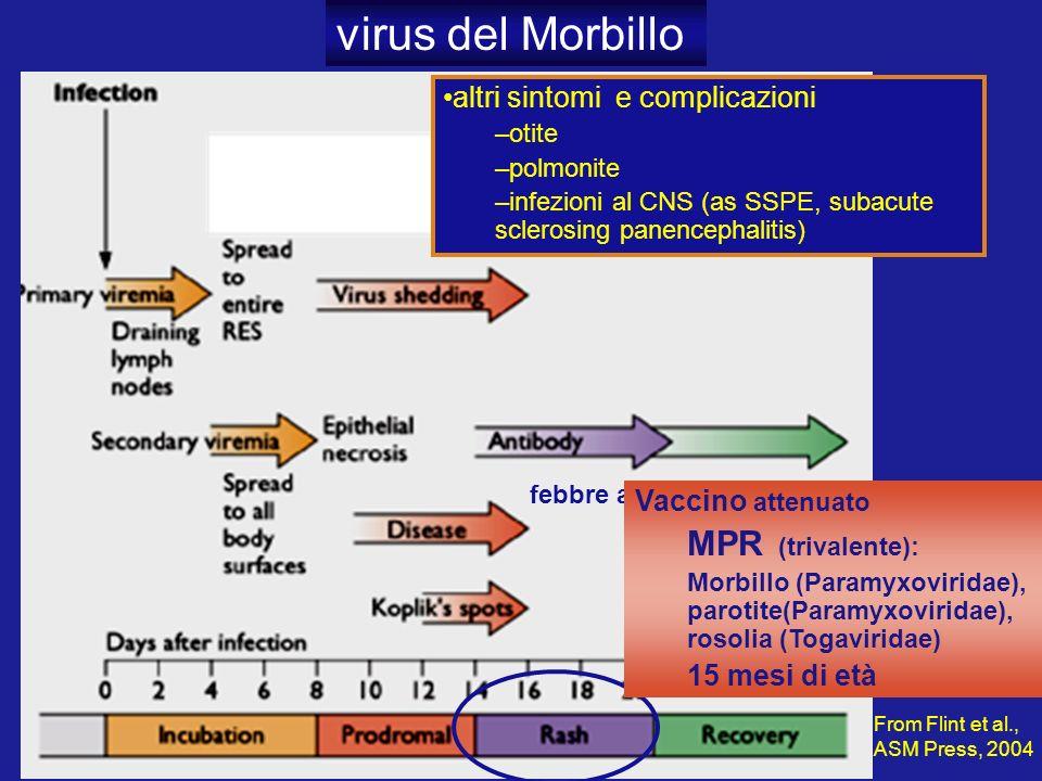 virus del Morbillo MPR (trivalente): altri sintomi e complicazioni