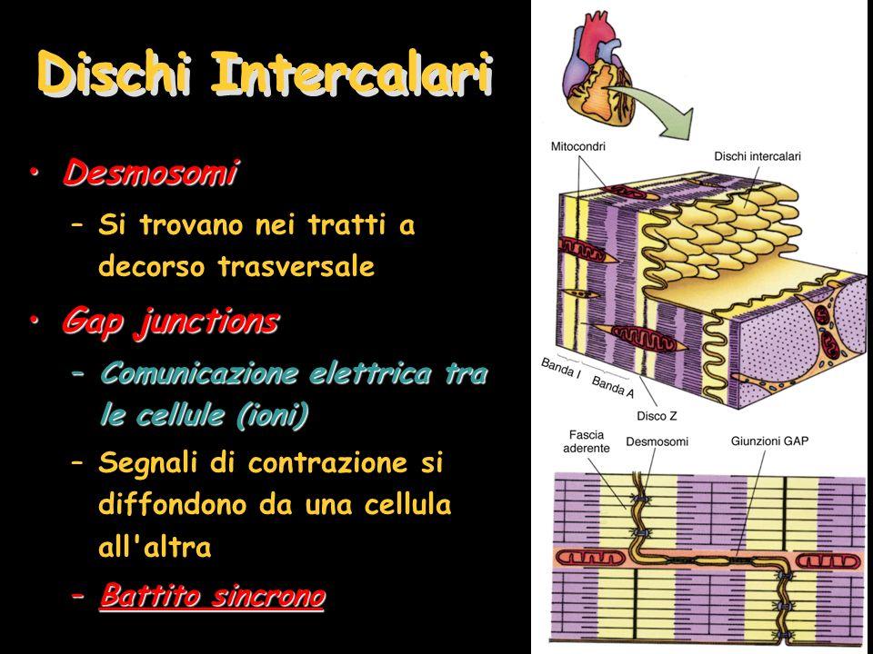 Dischi Intercalari Desmosomi Gap junctions