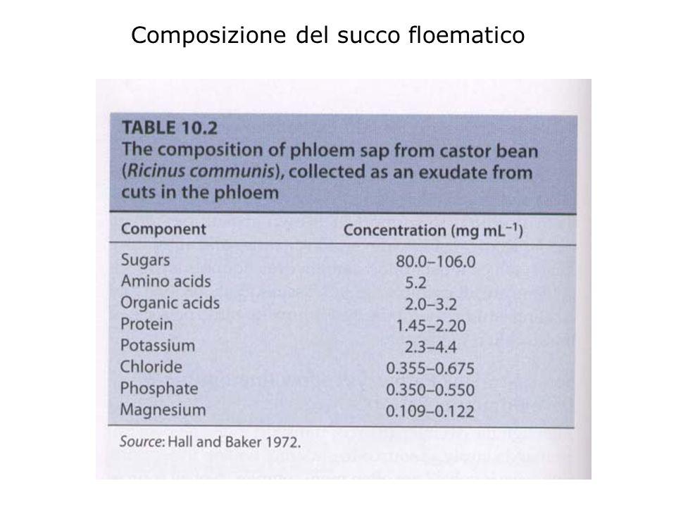 Composizione del succo floematico