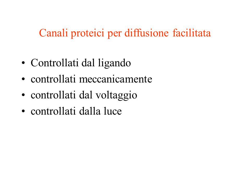 Canali proteici per diffusione facilitata