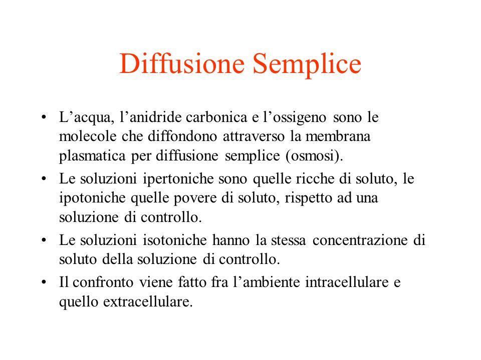 Diffusione Semplice