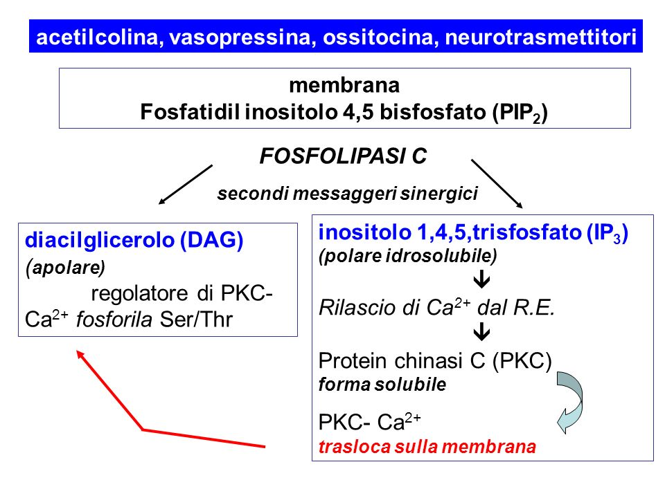 Fosfatidil inositolo 4,5 bisfosfato (PIP2)