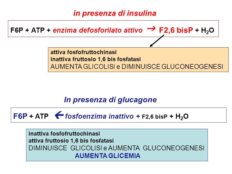 in presenza di insulina