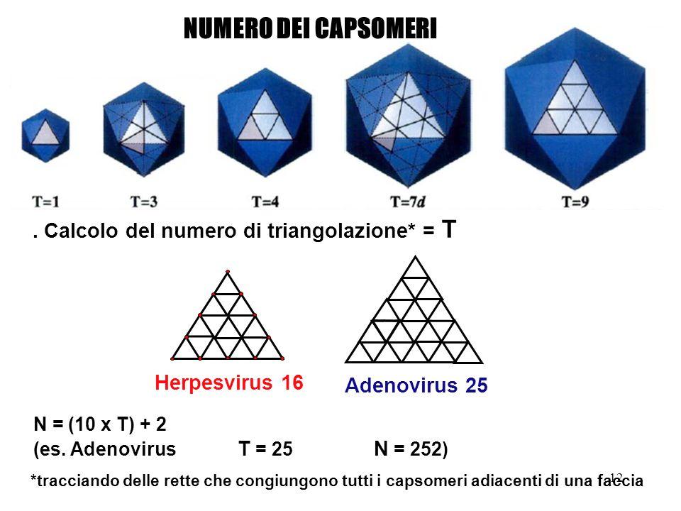 NUMERO DEI CAPSOMERI . Calcolo del numero di triangolazione* = T