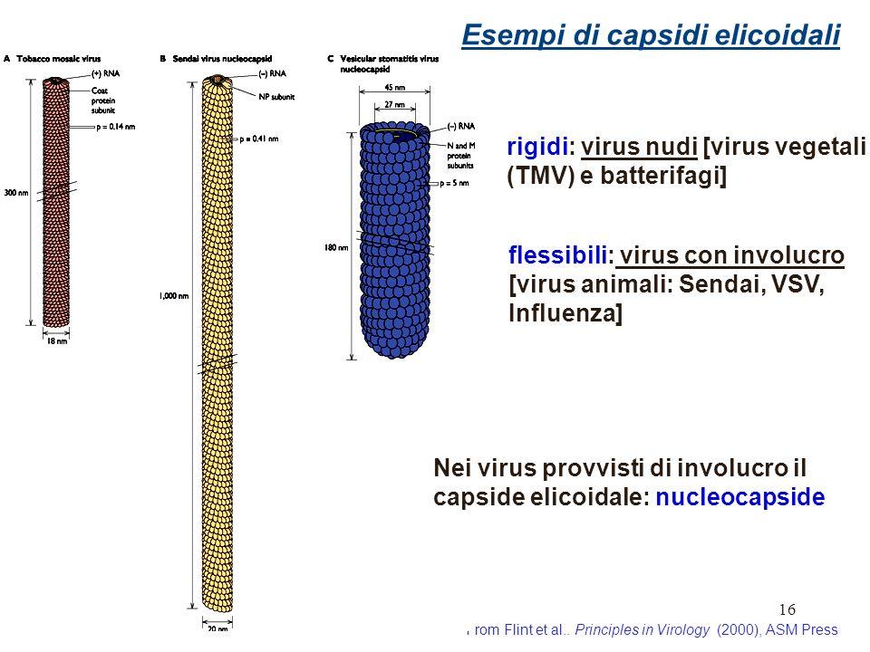 Esempi di capsidi elicoidali