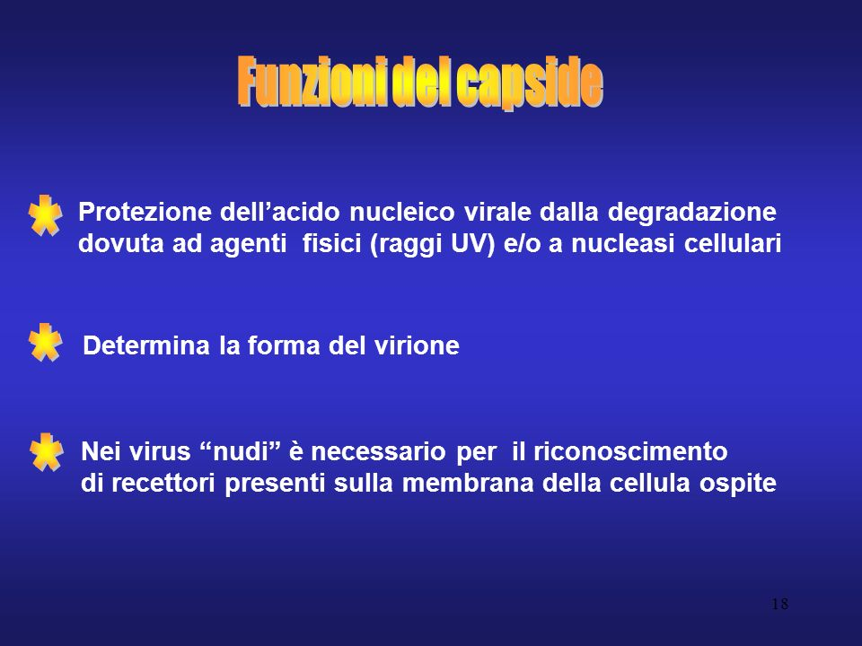 Funzioni del capside Protezione dell'acido nucleico virale dalla degradazione dovuta ad agenti fisici (raggi UV) e/o a nucleasi cellulari.