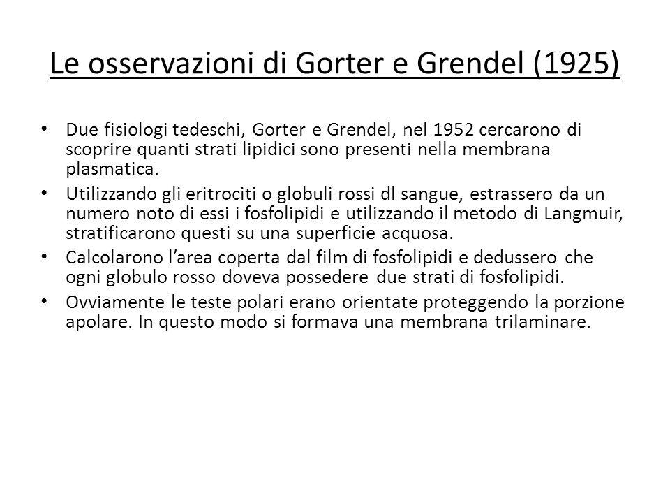 Le osservazioni di Gorter e Grendel (1925)
