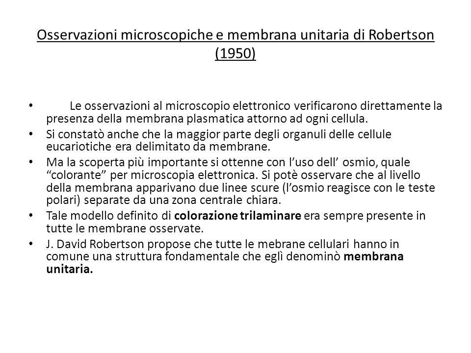 Osservazioni microscopiche e membrana unitaria di Robertson (1950)
