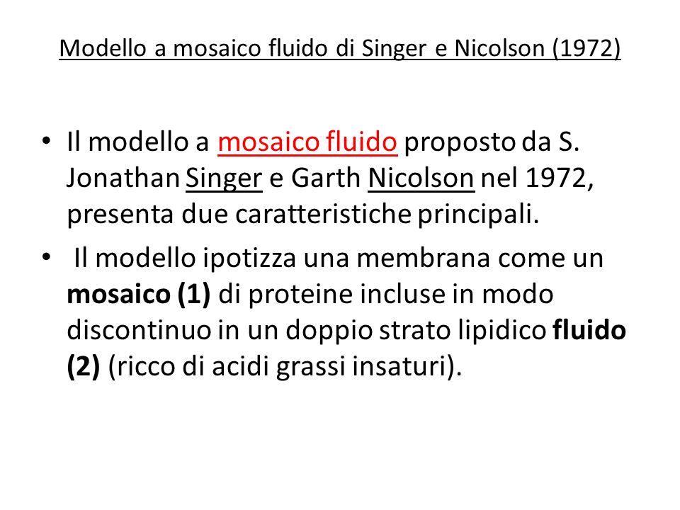 Modello a mosaico fluido di Singer e Nicolson (1972)