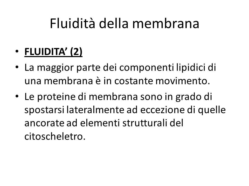 Fluidità della membrana