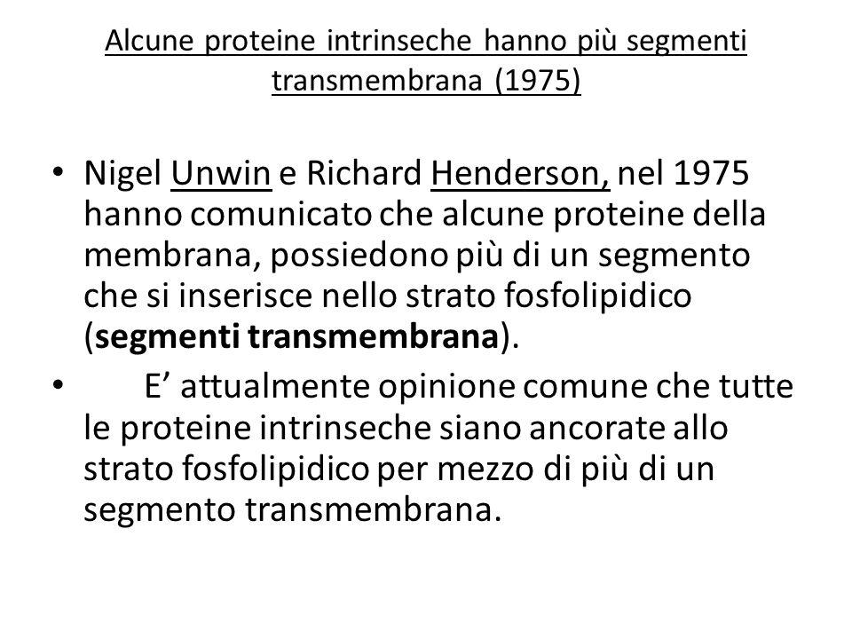 Alcune proteine intrinseche hanno più segmenti transmembrana (1975)