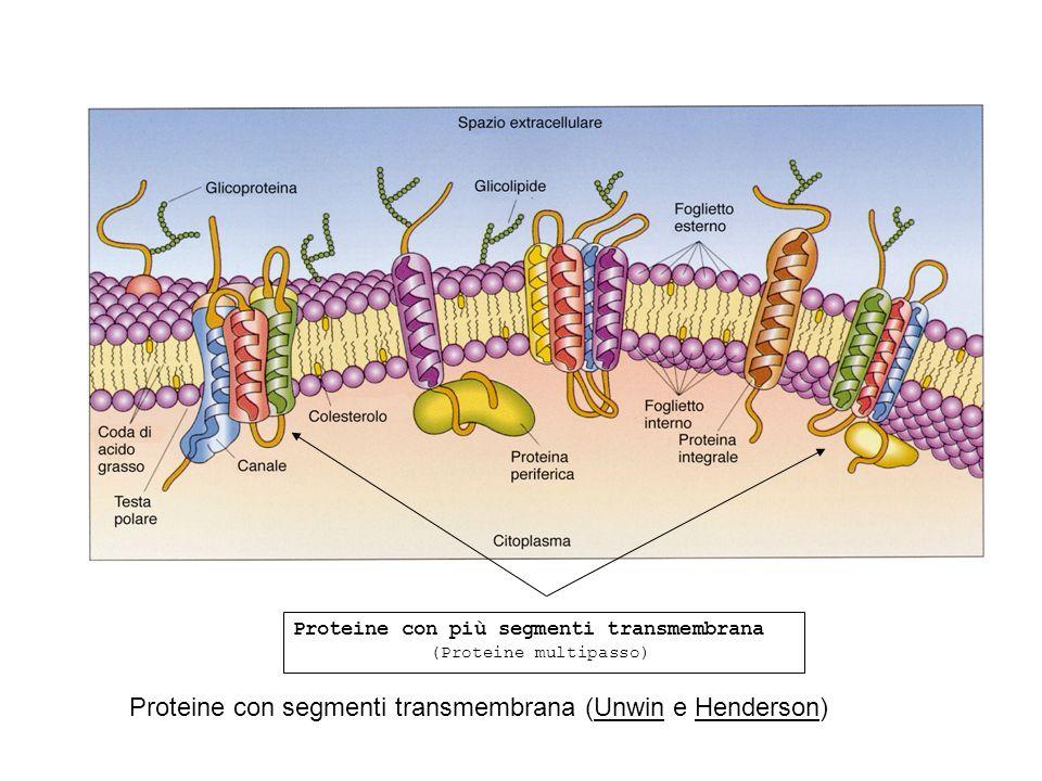 Proteine con segmenti transmembrana (Unwin e Henderson)
