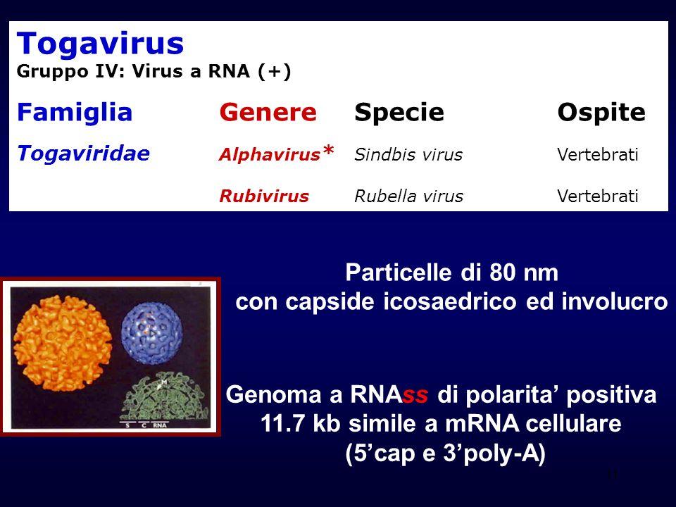 Togavirus Famiglia Genere Specie Ospite Particelle di 80 nm