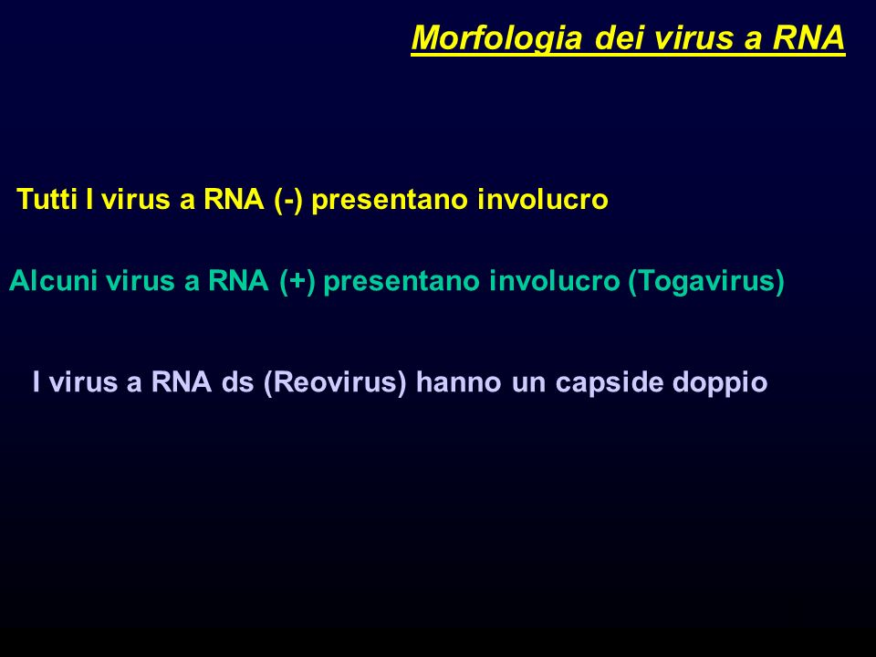 Morfologia dei virus a RNA