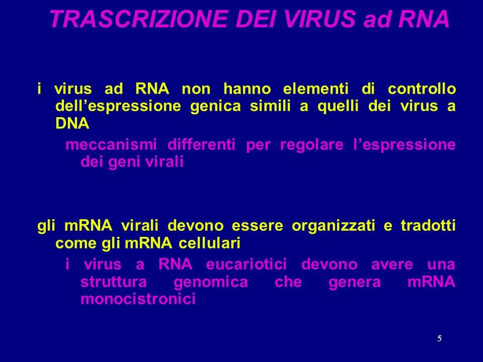 TRASCRIZIONE DEI VIRUS ad RNA