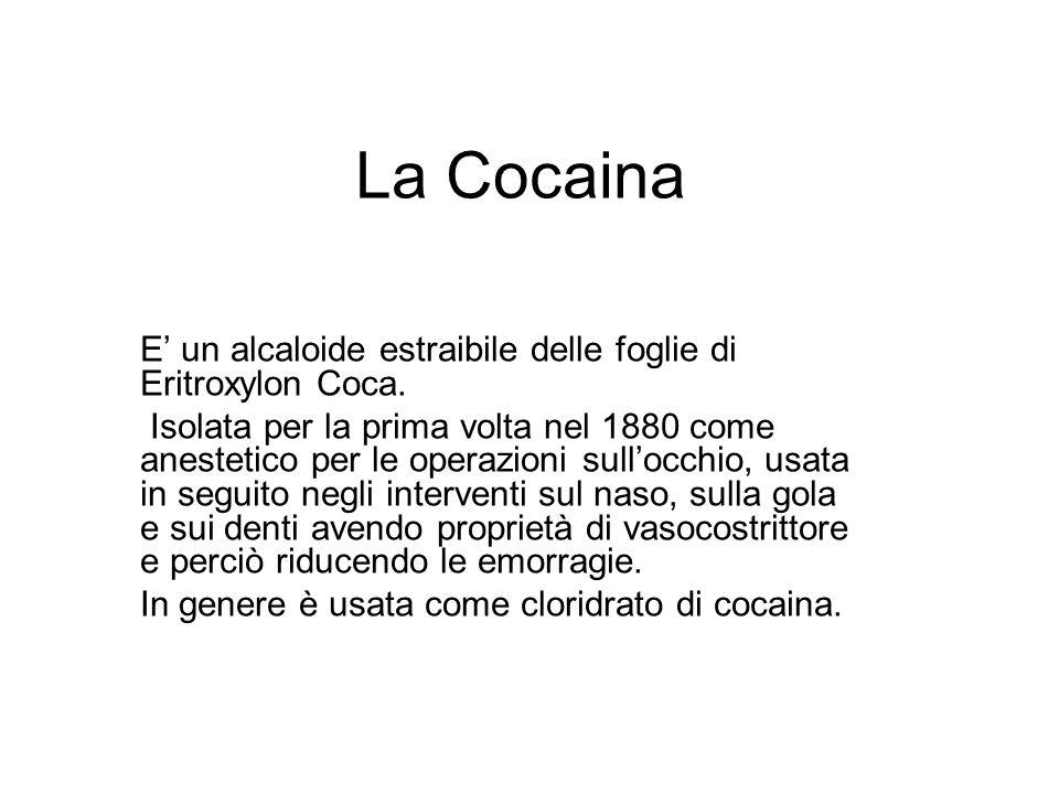 La CocainaE' un alcaloide estraibile delle foglie di Eritroxylon Coca.