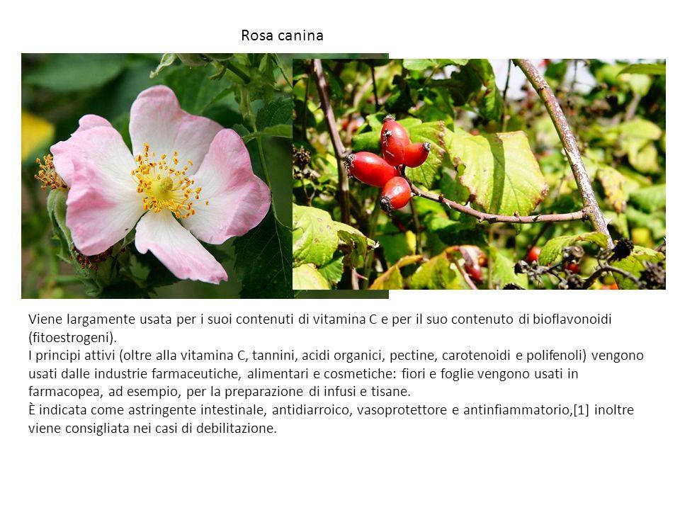 Rosa canina Viene largamente usata per i suoi contenuti di vitamina C e per il suo contenuto di bioflavonoidi (fitoestrogeni).