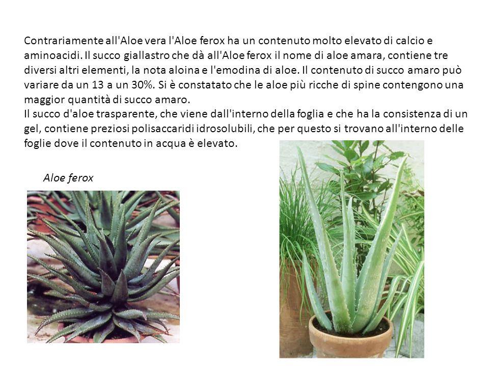 Contrariamente all Aloe vera l Aloe ferox ha un contenuto molto elevato di calcio e aminoacidi. Il succo giallastro che dà all Aloe ferox il nome di aloe amara, contiene tre diversi altri elementi, la nota aloina e l emodina di aloe. Il contenuto di succo amaro può variare da un 13 a un 30%. Si è constatato che le aloe più ricche di spine contengono una maggior quantità di succo amaro. Il succo d aloe trasparente, che viene dall interno della foglia e che ha la consistenza di un gel, contiene preziosi polisaccaridi idrosolubili, che per questo si trovano all interno delle foglie dove il contenuto in acqua è elevato.