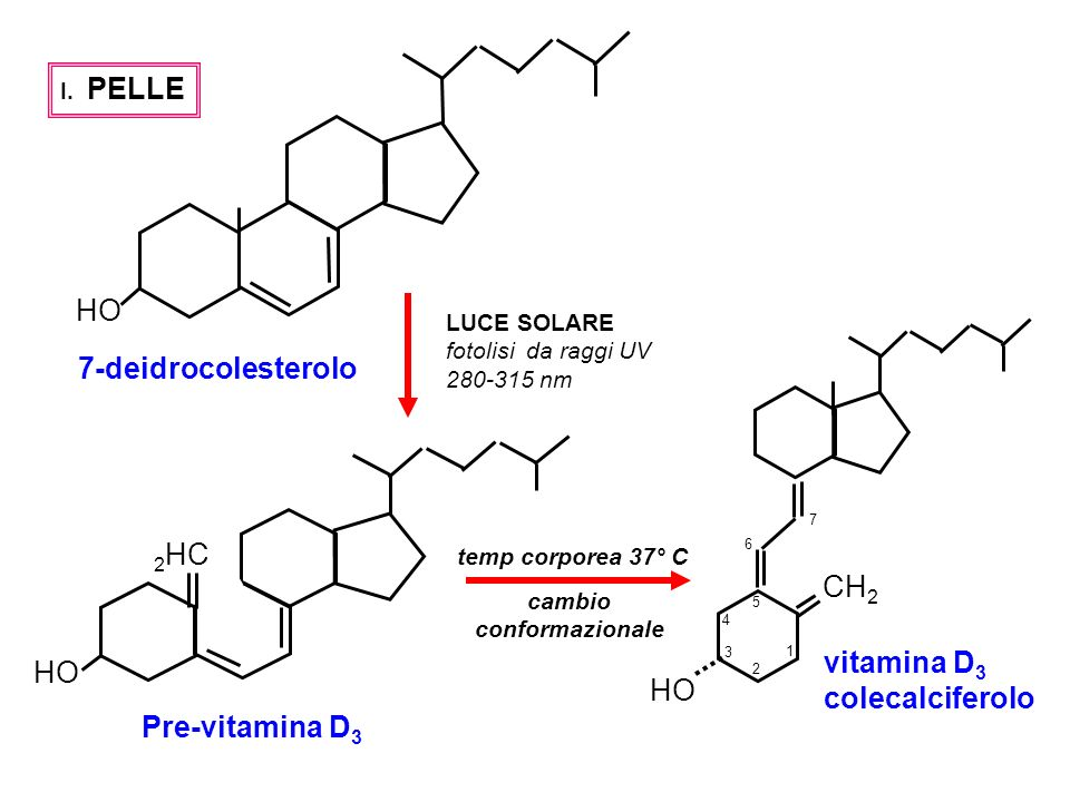 HO 7-deidrocolesterolo 2HC CH2 vitamina D3 colecalciferolo