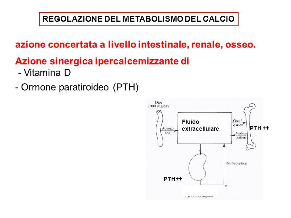 azione concertata a livello intestinale, renale, osseo.